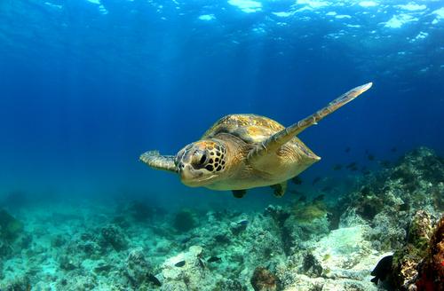 Die Galapagos Schildkröte live erleben