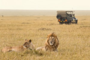 Safari im wilden Afrika